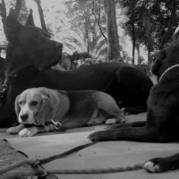 T-178 «La cultura de un pueblo se mide por el modo de tratar a los animales» M. Gandhi